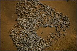 Quels animaux domestiques moururent en masse ?