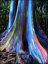 Terminons au Pays des Merveilles. Ses couleurs sont tellement extraordinaires qu'on croirait qu'un peintre est venu lui apporter sa touche personnelle, mais ce sont pourtant ses couleurs naturelles.