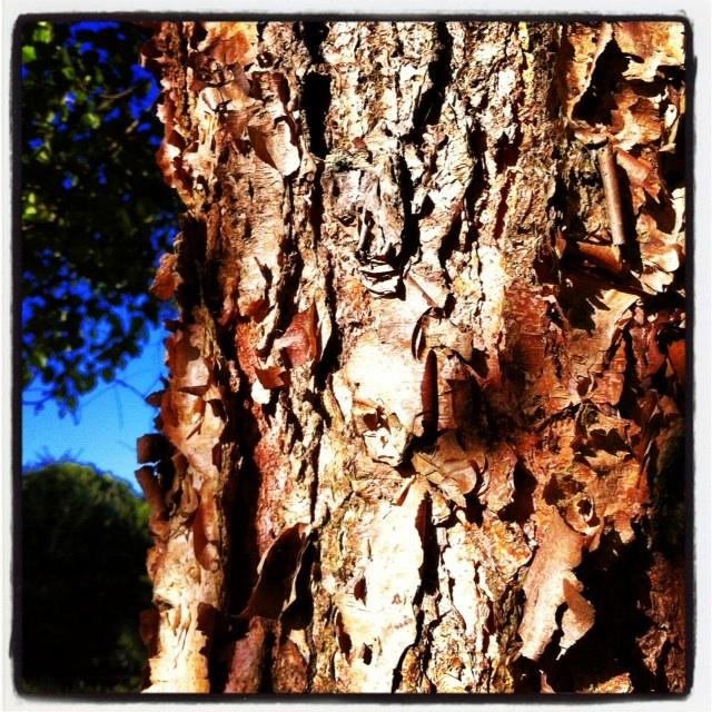Une écorce, un arbre