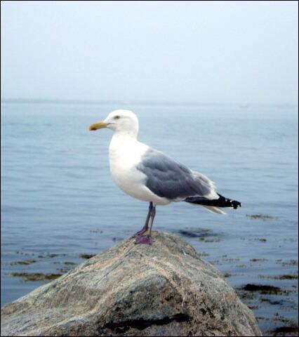 Au nom de cet oiseau à qui Robert Dhéry disait  Vos gueules , quelle lettre faut-il changer pour obtenir le nom du petit disque qui doit se trouver actuellement sous un de vos doigts ?
