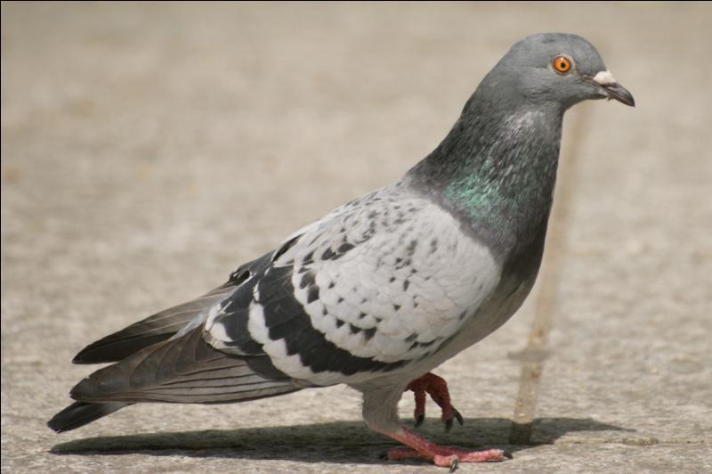 Pour trouver le nom de l'invité au  Dîner de cons  par quelle lettre devez-vous remplacer la quatrième du nom de cet oiseau ?