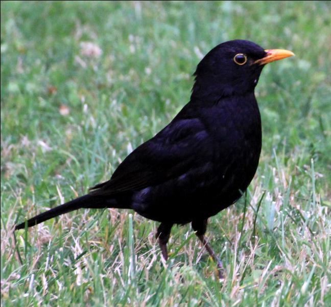 Pour obtenir le mot qualifiant une personne remarquable, il faut remplacer une des lettres du nom de cet oiseau par un :
