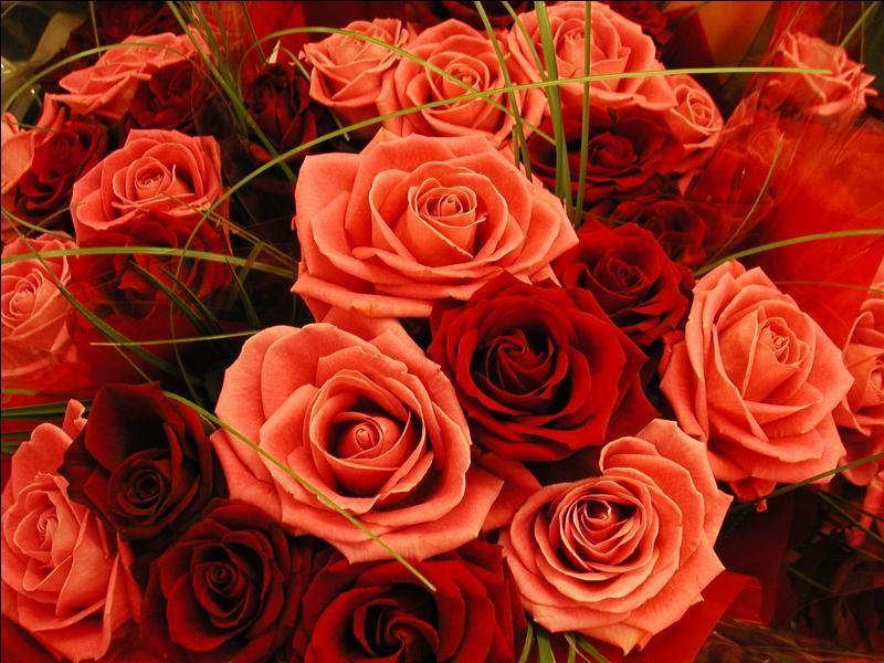 Qui ne souhaiterait se faire offrir ce magnifique bouquet de roses ... !