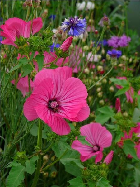 Elles fleurissent en été, en automne, et resplendissent.