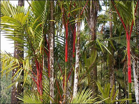 Le magnifique jardin Balata, en Martinique, offre de multiples variétés de :
