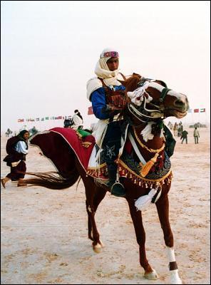 Dans quelle discipline le pur-sang arabe est-il le plus fort ?