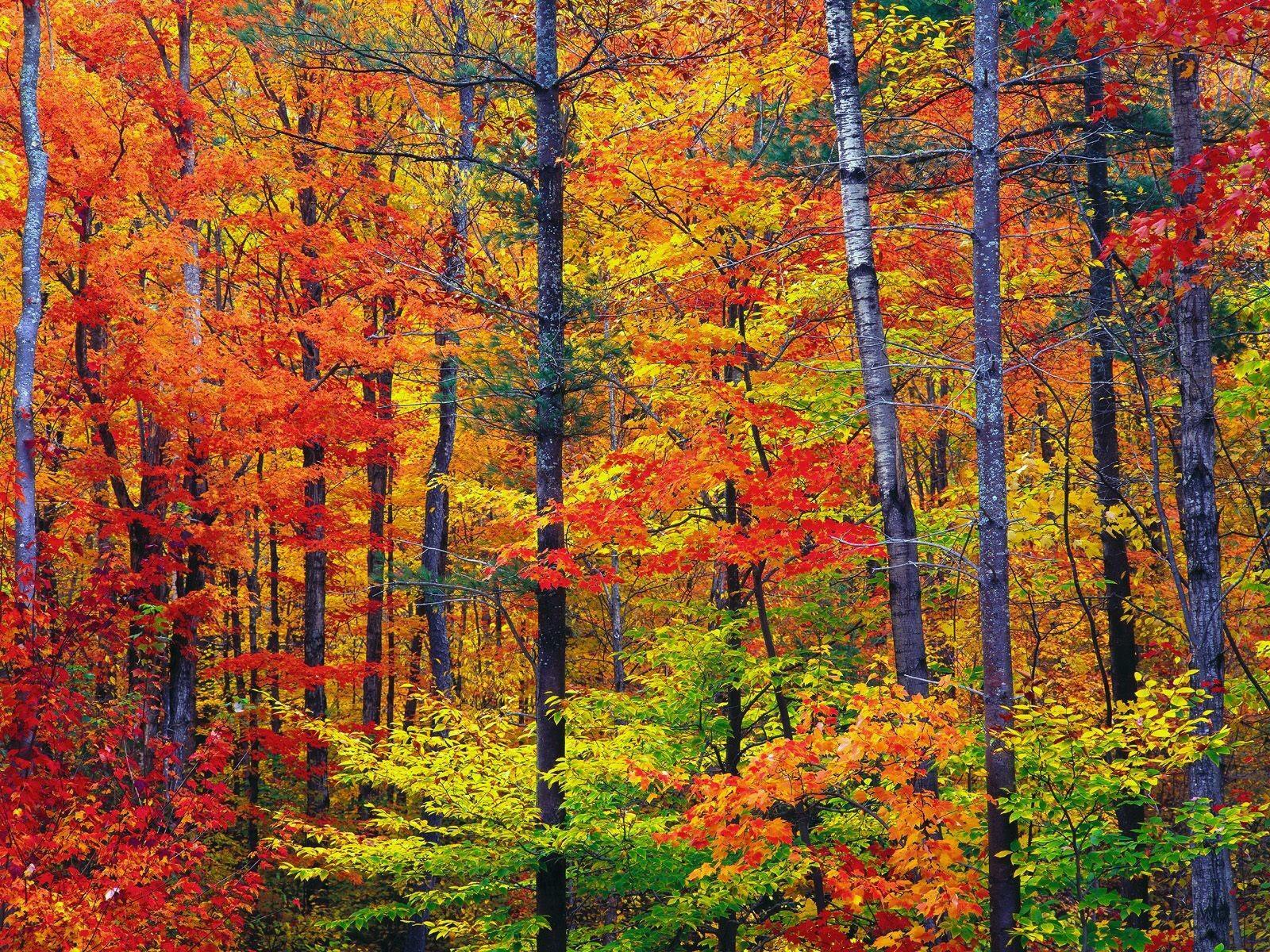 L'automne en anglais