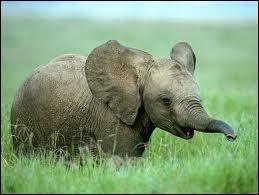 Comment dit-on  éléphant  en allemand ?