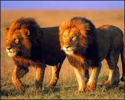 Comment dit-on  lion  en allemand ?