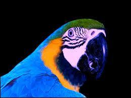 Comment dit-on  perroquet  en allemand ?