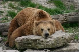 Comment dit-on  ours  en allemand ?