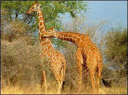 Comment dit-on  girafe  en allemand ?