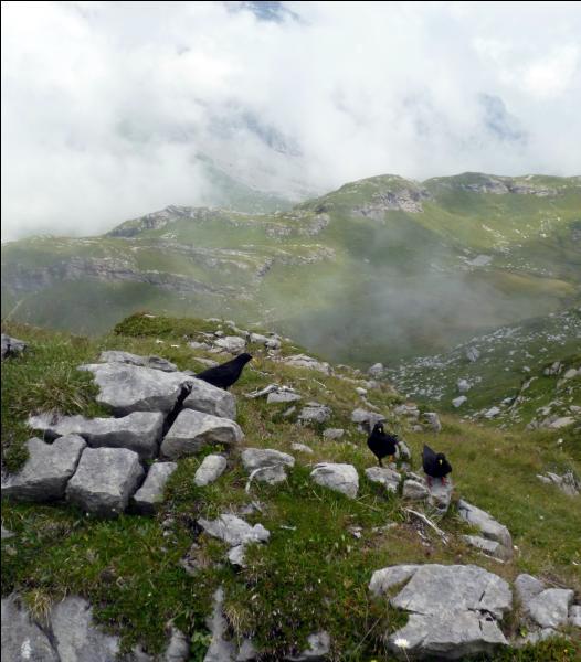 De quel col des Alpes vaudoises peut-voir ce paysage ?