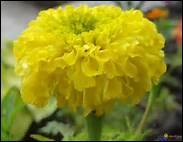 Comment s'appelle cette fleur ?