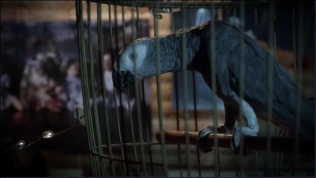 Mme DiLaurentis va donner un perroquet à Hanna. Que chante le perroquet ?