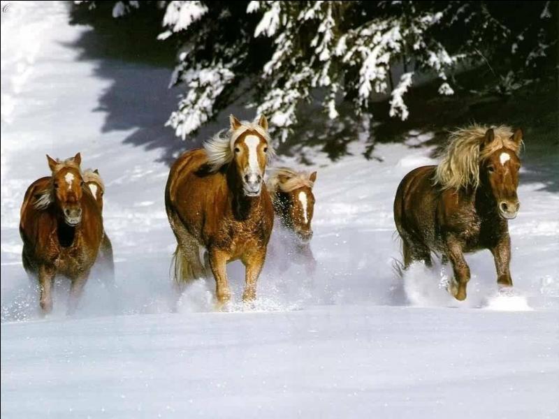 Pour équiper un cheval il faut ...