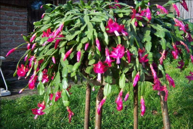 Quizz les fleurs d 39 automne quiz fleurs jardins - Fleurs vivaces d automne ...