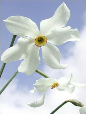 Quelle est cette fleur dont le parfum est ennivrant ?