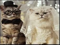 Vive les mariés !  On se dira oui, à la vie, à la mort.   est une phrase de la chanson... du chanteur belge Stromae :