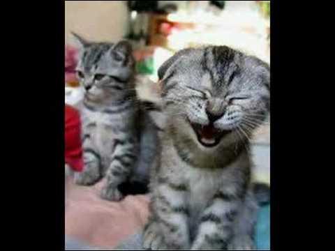 Il a l'air de bien rigoler ! Comme le dit la célèbre expression, est-ce possible de mourir de rire ?