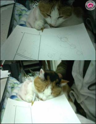 Chat  dessine bien !  Un Homme meurt lorsque son souvenir tombe dans l'oubli !   est une citation que l'on retrouve dans le manga :