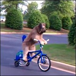 C'est qu'il est rapide, nom d'un chien ! Des chercheurs australiens affirment que la Mort  se déplace  à la vitesse d'environ :