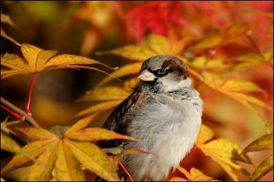 Qui chantait   Un soleil palissant jette encore sa lumière sur un oiseau errant qui fuit devant l'hiver. Au retour de l'automne feras-tu comme l'oiseau ? ... . Restera-t-il encore un peu de notre amour au premier vent du Nord aux premiers mauvais jours  ?