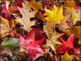 Qui a écrit le recueil  les feuilles d'automne  ?