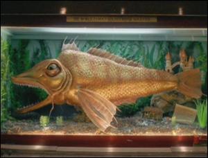 Que se passe-t-il si quelqu'un touche ce poisson ?