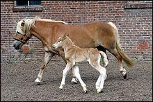 Si un poulain est né dans l'année du  H , comment peut-on l'appeler ?