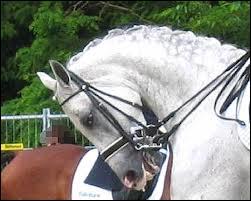Comment s'appelle cette technique de dressage assez dangereuse qu'exerce ce cheval ?
