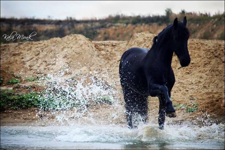 Le cheval peut-il percevoir des tremblements de terre ?