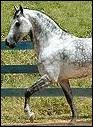 Ce magnifique cheval a la robe...