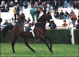 Quelle est la race de ce cheval de course ?