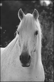 Quelle est la race de ce splendide cheval gris ?