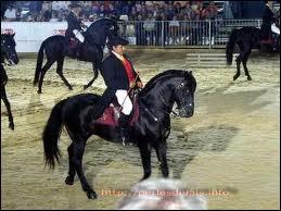 Quelle est la race de ce magnifique cheval noir ?