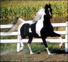 Quelle est la race de ce cheval très gracieux ?