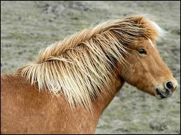 Quelle est la race de ce poney trop chou ?