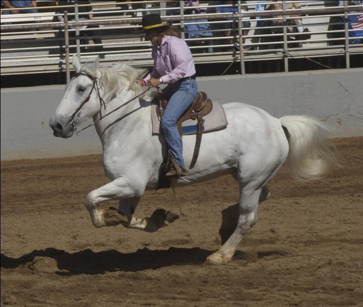 Quelle est la race de ce cheval de trait ?
