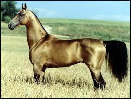 Quelle est la race de ce cheval tout fin ?