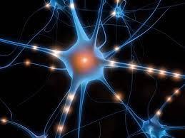 Vrai ou faux sur les neurones