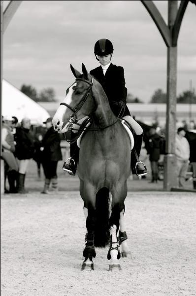 Et pour finir, quel est le métier qui constitue l'équitation ?