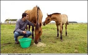 Il fait naître les chevaux dans le but du commerce. On l'appelle :