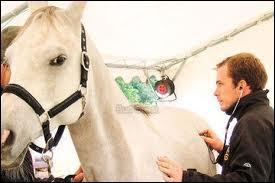 Cette personne soigne les chevaux malades dans plusieurs domaines : chirurgie, ophtalmologie... . Alors, que répondez-vous ?