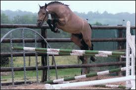 Trouve le mécanisme du saut !