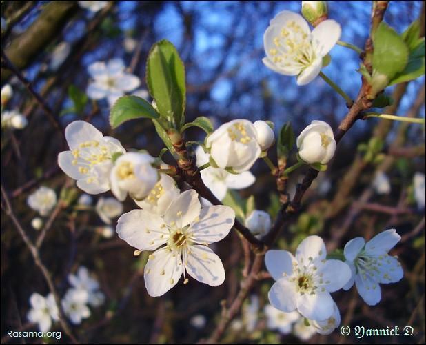 Comment appelle-t-on l'arbre qui produit cette jolie fleur ?