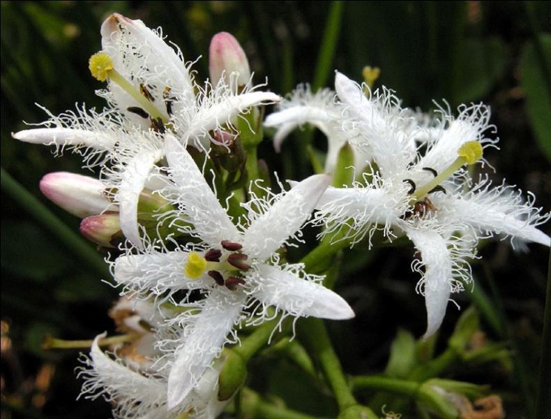 Quizz des fleurs blanches quiz fleurs plantes nature - Comment trouver le nom d une plante ...