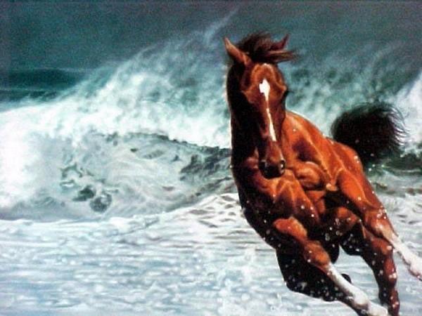 Le cheval c'est ton truc