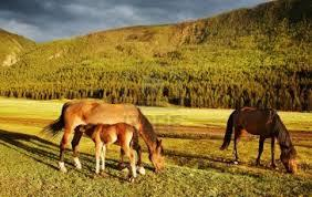 Avec les chevaux