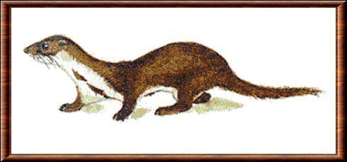 Quel est cet animal qui mesure jusque 38cm ?